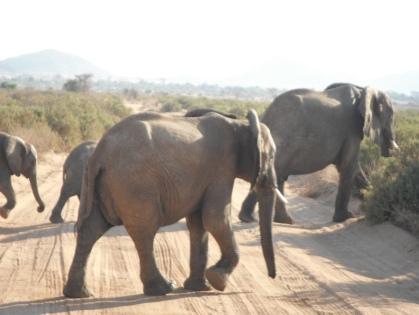 Elephants Cross Silently